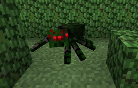 hedge_spider