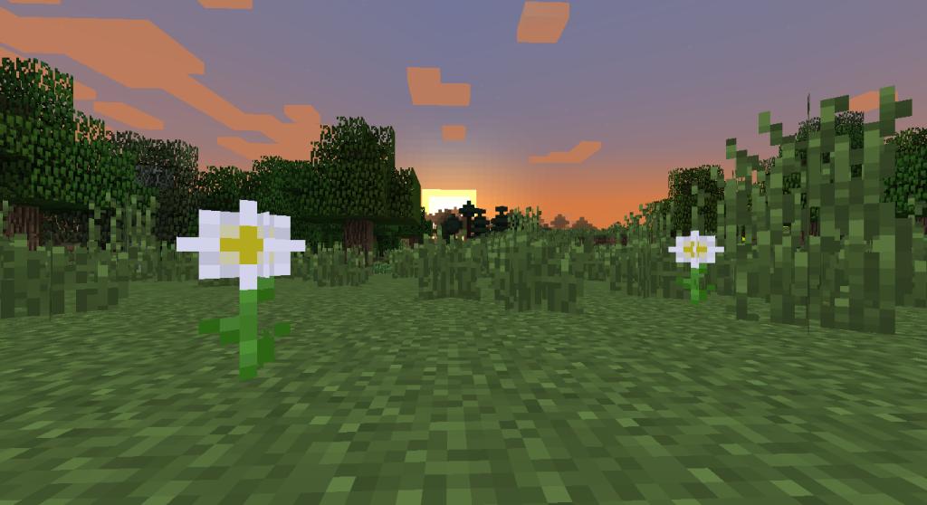 """""""Oxel daisy"""" au coucher du soleil.."""