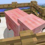 Relooking du cochon timide !