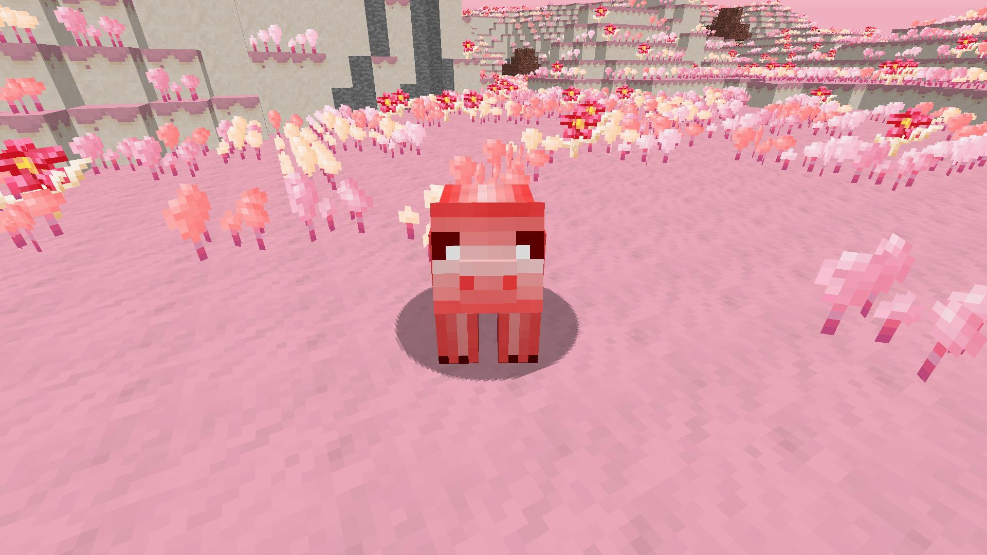 Cochon d'orge