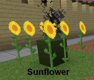 sunflower zombies