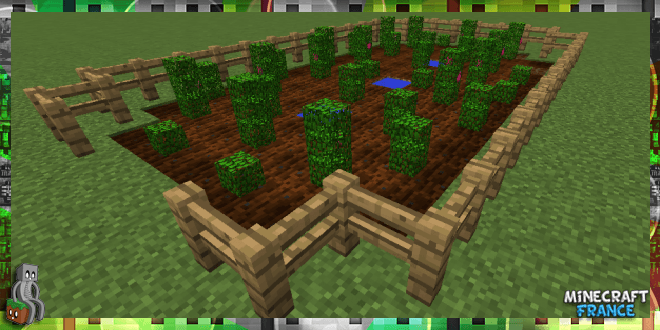 Photo of [No Mod] Des tomates dans Minecraft ! [1.8|1.9]