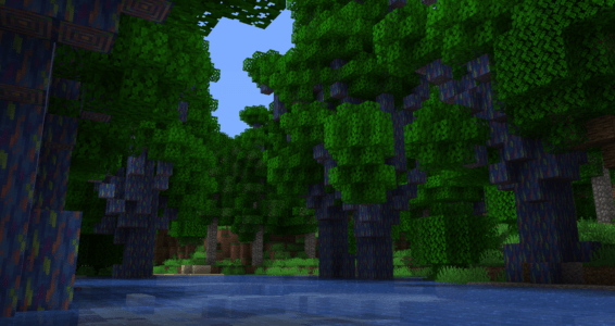Forêt tropicale arc-en-ciel