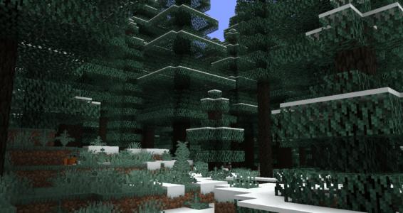 Forêt tsuga des neiges