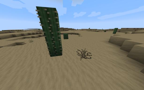 Aperçu du biome désert