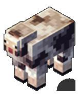 Le mouton rocheux