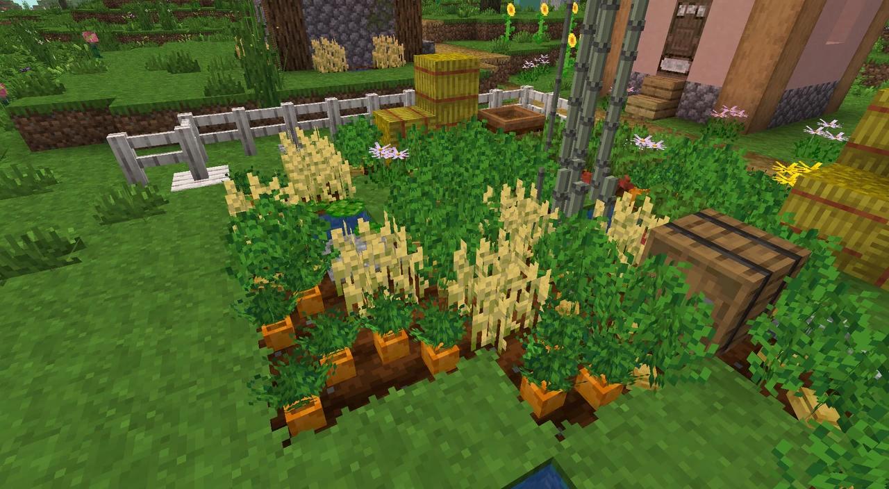 shengling - Un petit jardin ou des carottes ont été planté